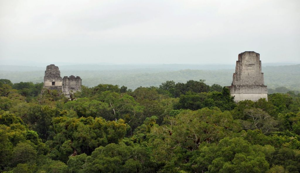 La selva de Tikal