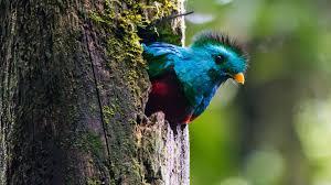 Aves de guatemala