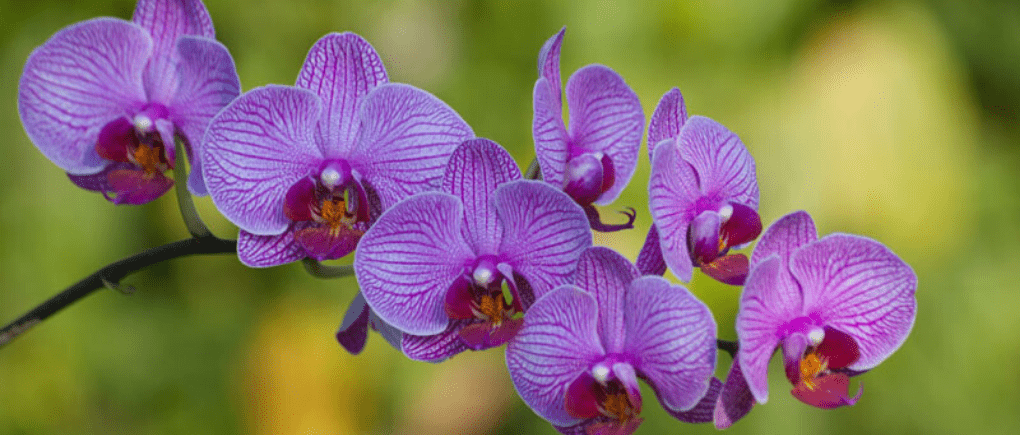 Guatemala un santuario de flores